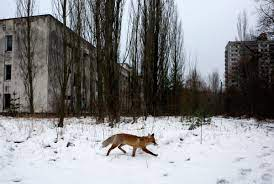 The series was created and written by craig mazin and directed by johan renck. The Chernobyl Disaster May Have Also Built A Paradise Wired