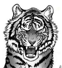tiger face growling drawing.  Drawing Refined The Whole Sketch From Yesterday So Itu0027s A Kind Of Painting And God  Do I Ever Love This Tiger Roar With Face Growling Drawing O