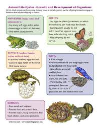 Learn About Animals Life Cycles And The Next Gen Science