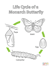 Small Picture Life Cycle of a Monarch Butterfly coloring page Free Printable