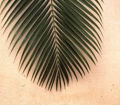 Fotos gratis : naturaleza, rama, ala, planta, madera, espiral, flor,  verano, patrón, línea, verde, natural, Fresco, jardín, flora, pluma,  material, circulo, frescura, pestaña, de cerca, diseño, simetría, vibrante,  forma, hoja de palma,