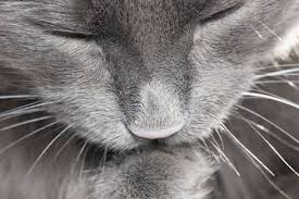Image result for BING - PICTURES OF CLOSED EYED CATS