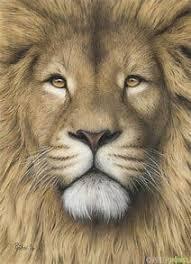 lion drawing color.  Lion Realistic Colored Pencil Lion Drawings In Drawing Color C