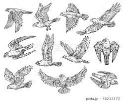 鷹のイラスト素材 Pixta