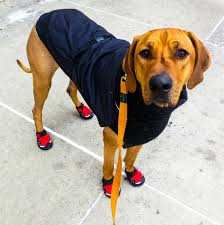 10 durable winter dog boots to protect your pup s paws all season