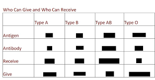 Abo Blood Chart Fill In The The Blank Diagram Quizlet
