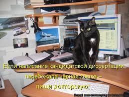 Котоматрица Остальное Если написание кандидатской диссертации перебежала чёрная кошка пиши докторскую