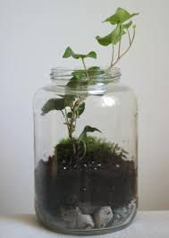 Little Projectiles: Ivy in a Jar