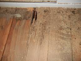 Termite damage in wooden floor