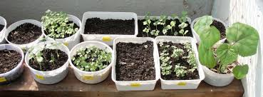 Kitchen Garden Herbs Apartment Plants Herbs Ordning Utensil Holder Hacks