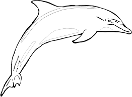 Small Picture free online coloring pages of dolphins dolphin outline clip art