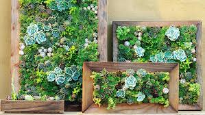 wondrous ideas succulent wall art home design framed marvelous decoration kit better homes and