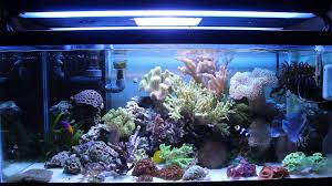 Saltwater Aquarium Lighting Guide A Beginners Guide To The Best Choice For Aquarium Corals
