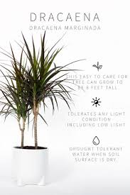 House Plants Low Light Requirements Master List Of Low Light Indoor Plants Indoor Plants Low
