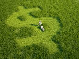 blog page lawn mowing ads