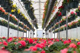 garden centers nj. Our Products Range From Traditional Holiday Plants And Annuals, To The More Unusual Specialty Crops. Many Years Of Horticultural Experience Garden Centers Nj E