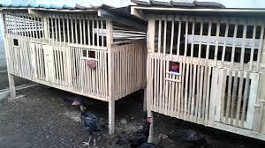 Pembayaran mudah, pengiriman cepat & bisa cicil 0%. Ukuran Ideal Kandang Ayam Bangkok Tentang Kolam Kandang Ternak Di 2021 Desain Kandang Ayam Kandang Ayam Desain
