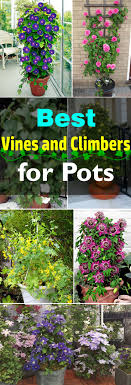 Supports For Climbing Beans And PeasWall Climbing Plants Names