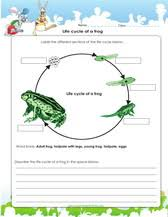 Color the Life Cycle  Frog   Worksheet   Education likewise 1405510797 05 03 02 003 s further Frogs Life Cycle furthermore Life Cycle of a Frog Worksheets also Quiz   Worksheet   Frog Life Cycle Facts for Kids   Study also Life Science Learning  Life Cycle of a Frog   Group activities likewise Frog Dissection Worksheet   payasu info further  besides 2nd Grade Life Science Learning Resources   Education moreover Frog Life Cycle Worksheet   Anchor Chart   PrimaryLearning org besides . on science frog worksheet
