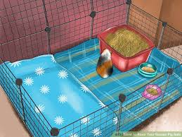 image titled keep your guinea pig safe step 1
