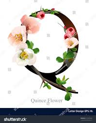 Letter Q vector alphabet with pink quince flower. ABC concept type as logo.  Typography