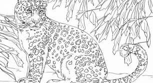 Leopard Coloring Page Design Templates