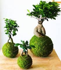 Decorative Moss Balls 100 Pcs Bryophyte Moss Bonsai Seeds Lovely Moss Ball Decorative 74