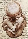 foetal movement
