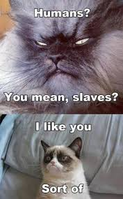 Grumpy Cat inspire me please! on Pinterest | Grumpy Cat Meme ... via Relatably.com