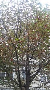 20171024_103509_original. Massachusetts trees and shrubs
