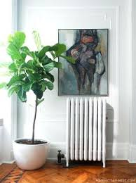 Fiddle Leaf Plant Somewhere. Dining Room? Living Room? Ooh, Kitchen.  SOMETHING