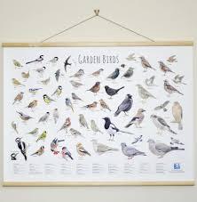 Garden Birds Wallchart Cj Wildlife