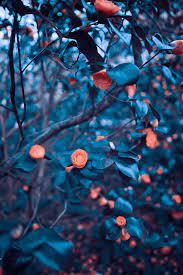 Blur Green Tree Background Wallpaper ...