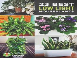 best low light office plants. Best 25+ Low Light Plants Ideas On Pinterest | Indoor .. Office