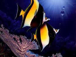 Биология животных Тип хордовые Класс рыбы  Морская рыба