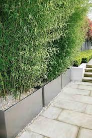 Bambuspflanzen In Pflank Beln Als Sichtschutz F R Den Balkon