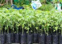 Grow bags are a low-cost alternative to plastic pots and are made from a  specially formulated plastic that provides for a longer life than any other  on the ...
