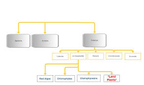 Domain And Kingdom Flowchart Best Picture Of Chart