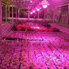 Zako cung cấp sản phẩm đèn led hỗ trợ cho cây quang hợp