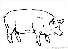 Small Picture Pig Coloring Page Coloring Page Free Pig Coloring Pages