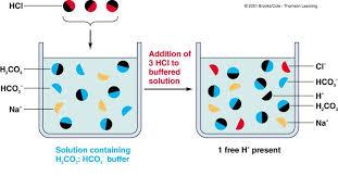 Buffers Indicators Acids And Bases 101 The Basics Of Chemistry
