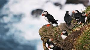 best places to travel in gear patrol faroe islands best adventure travel gear patrol