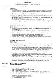 Internal Audit Associate Resume Sample as Image file