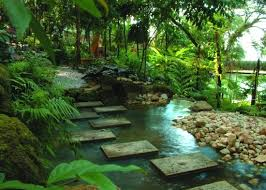 Small Picture Jungle garden Writing and Stuff Pinterest Jungle gardens