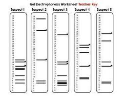 How To Read A Dna Fingerprint Chart Pin On Biology 18 19