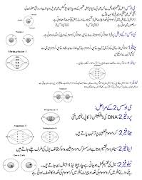 essay on my favorite personality in urdu com essay on my favorite personality in urdu
