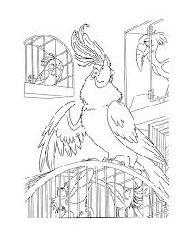 Perroquet Coloriage A Imprimerll Duilawyerlosangeles