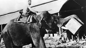 bbc radio orwell s essay shooting an elephant was published  orwell s essay shooting an elephant was published