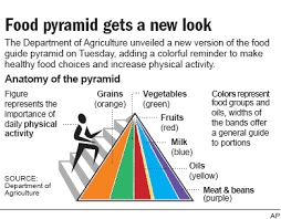food pyramid 2014. Brilliant Food Next Story In Fitness Many Children Not Getting Enough Exercise Study And Food Pyramid 2014