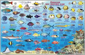 Oahu Fish Chart 40 Punctilious Kauai Fish Chart